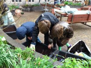 Alfred, Thorkild og Alma sår grøntsager i murerbaljerne.