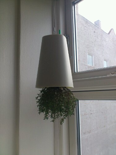 Skyplanter med timian (nej, billedet vender ikke på hovedet)