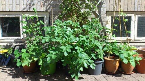 Tilplantede udendørs potter
