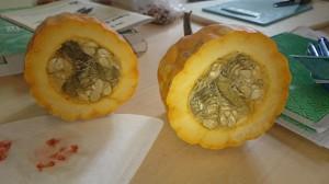 Overskåret græskar - frøene skal behandles ligesom tomatfrø, dvs. ideelt set gæres.