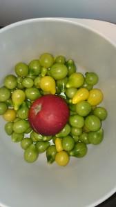 Et æble i skålen skulle fremme modningen af de grønne tomater.