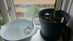 Blumat monteret i agurkens potte - endnu en sammenhæng, hvor en margretheskål er uundværlig.